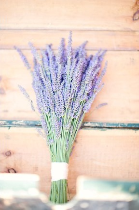 fresh-lavender-bunch