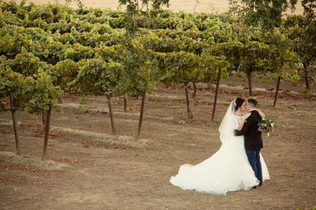 newlyweds in vineyard at Scribner Bend