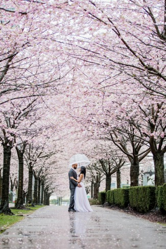 couple stand under rainy cherry blossom canopy