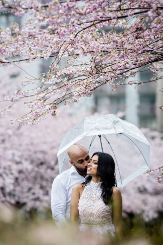 couple under clear umbrella and cherry blossom tree