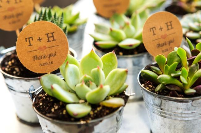 mini succulent favors