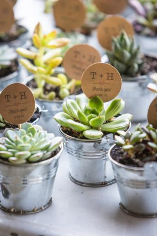 plant in tin pots favors