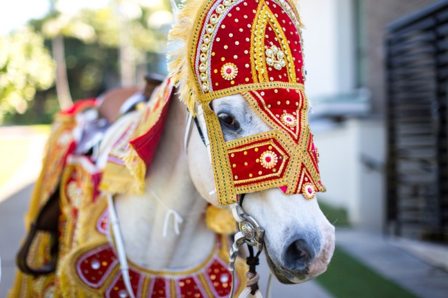 horse in traditional Indian wedding costume