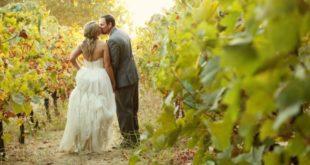 newlyweds stroll among vines
