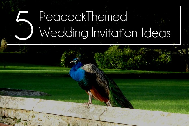 peacock themed wedding invite ideas