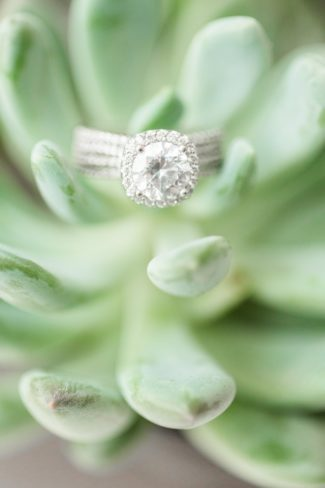 halo enggement ring on succulent