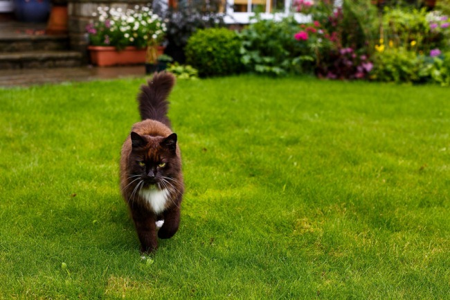 long haired cat on grass