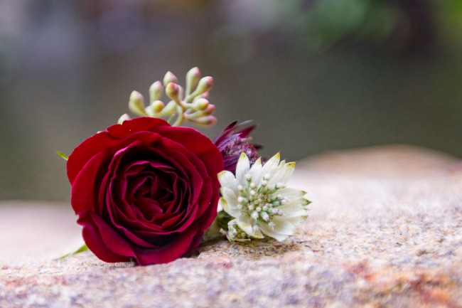 red rose on stone