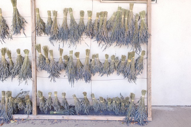dried lavend bunches hung on rack