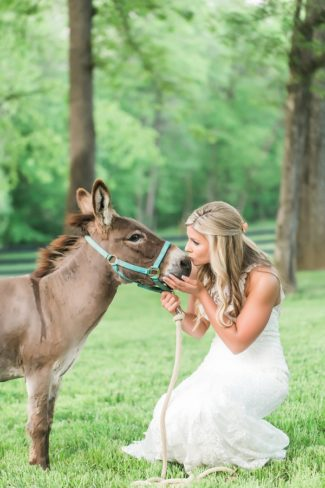 bride kissing a donkey