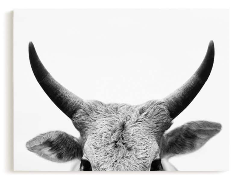 Minted wall canvas of a cow with horns entitled jane gallagher