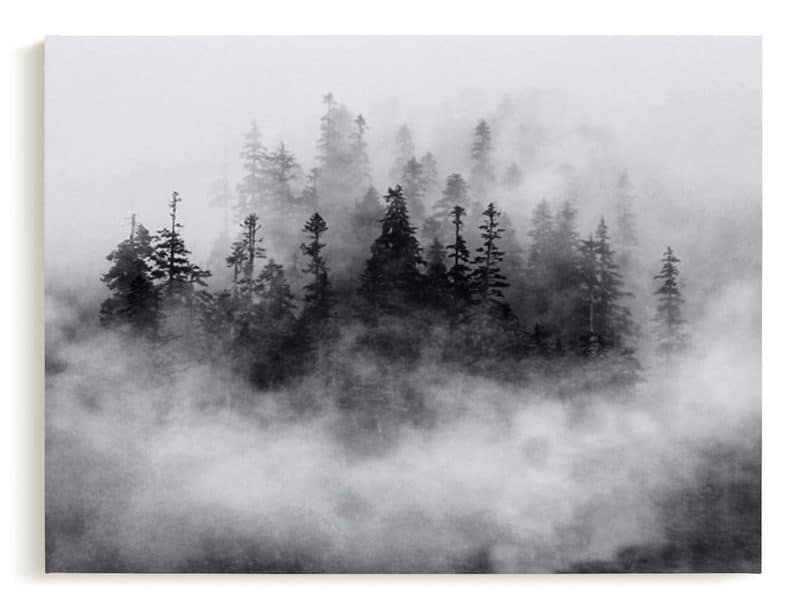 lost in the fog canvas art from minted photo of the great north west