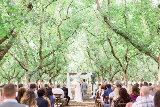 Almond Orchard Wedding in California feature