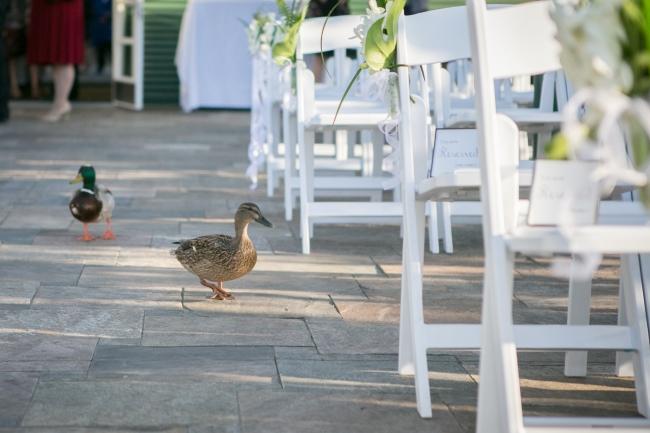 San Diego Zoo – Wild and Wonderful Wedding featured