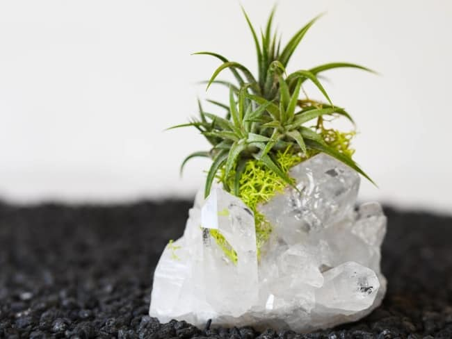 Quartz Crystal Cluster Air Plant for anniversary gift for him