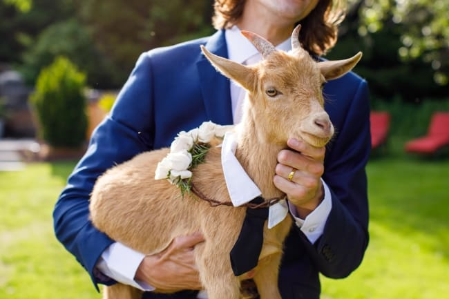 Rose & Goat Retreat Wedding feature