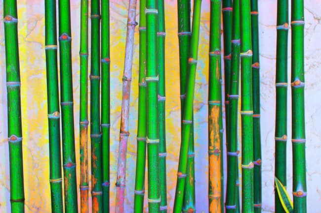 bamboo forest painting