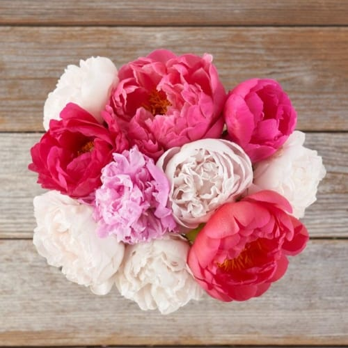 Colorful bouquet of Peonies