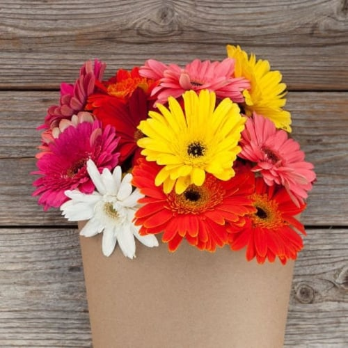 Bouquet of brightly colored daisies
