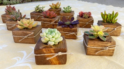 Wooden box planters for succulents