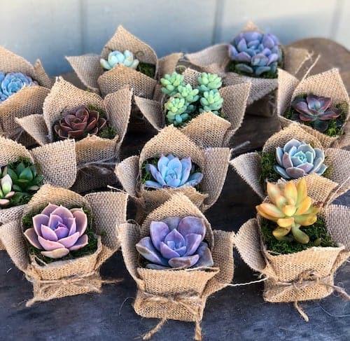Burlap-wrapped succulents