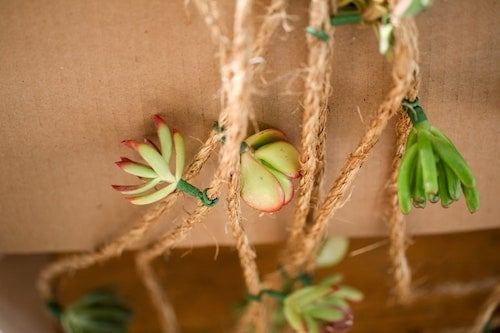 Mini succulents on twine