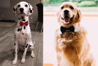 Dog Collar Bowtie
