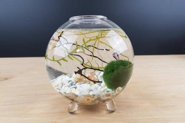 Glass Globe Marimo Moss Ball Terrarium Kit