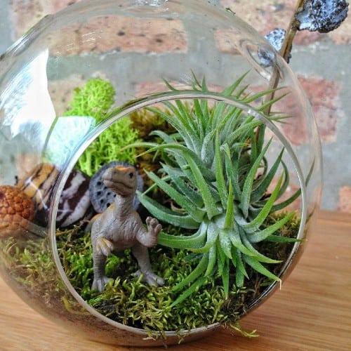 Kid's Dinosaur Moss Terrarium