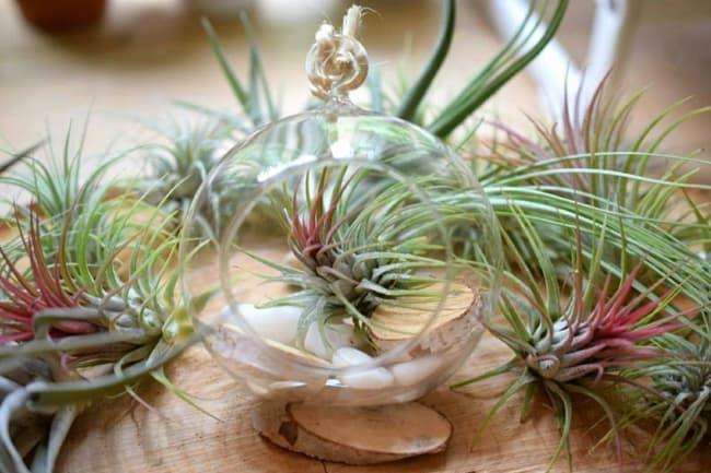 hanging terrarium ideas - featured