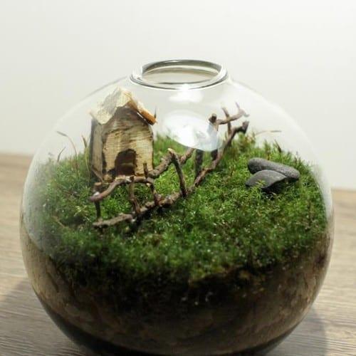 Live Moss Mini Terrarium