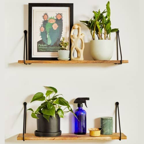HousePlants by The Sill